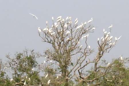 Birds in Vietnam national parks